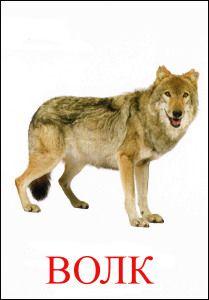Волк картинка для детей | Животные, Дикие животные