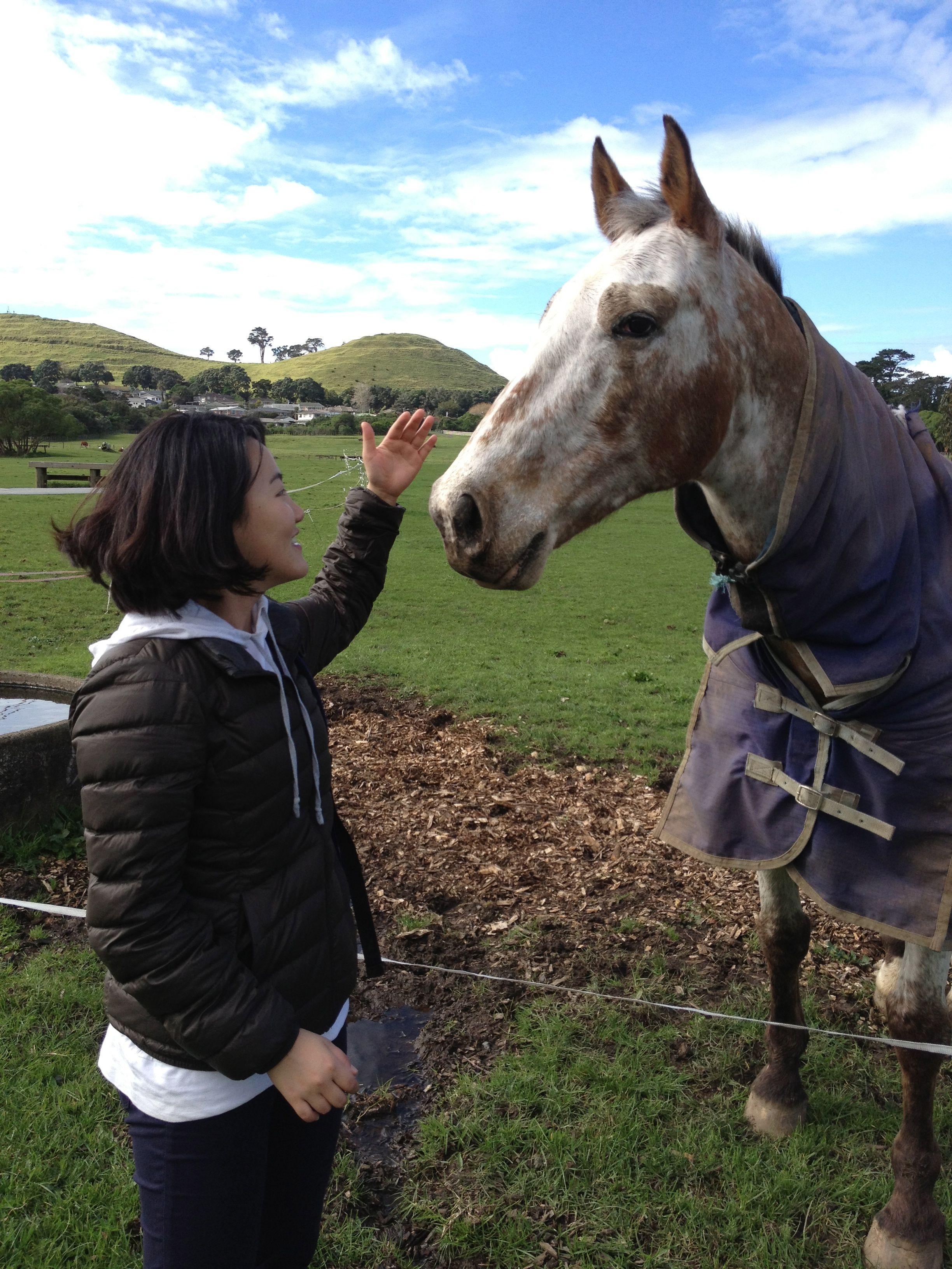 Friendly Horse at Ambury Park