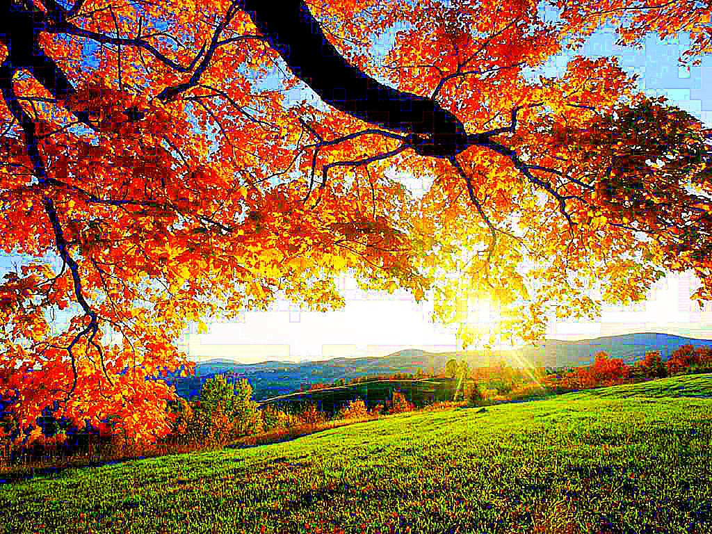 Autumn Leaves Bing Images Beautiful Dream Autumn Leaves Fall Is Here