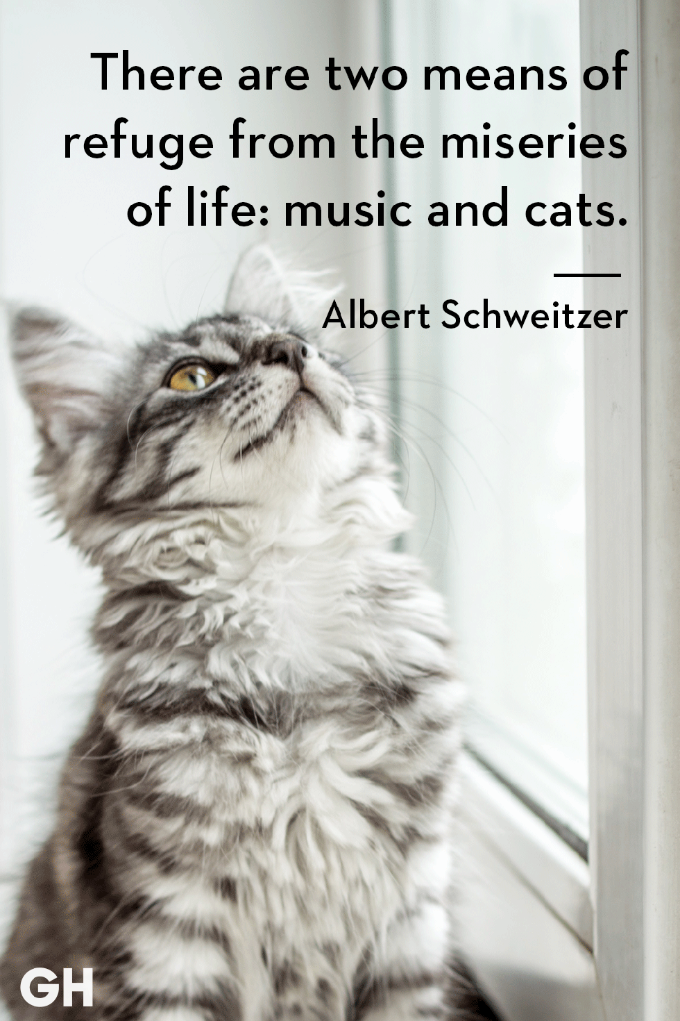 25 Quotes Only Cat Owners Will Understand Kittens Funny Cat Quotes Funny Cat Quotes