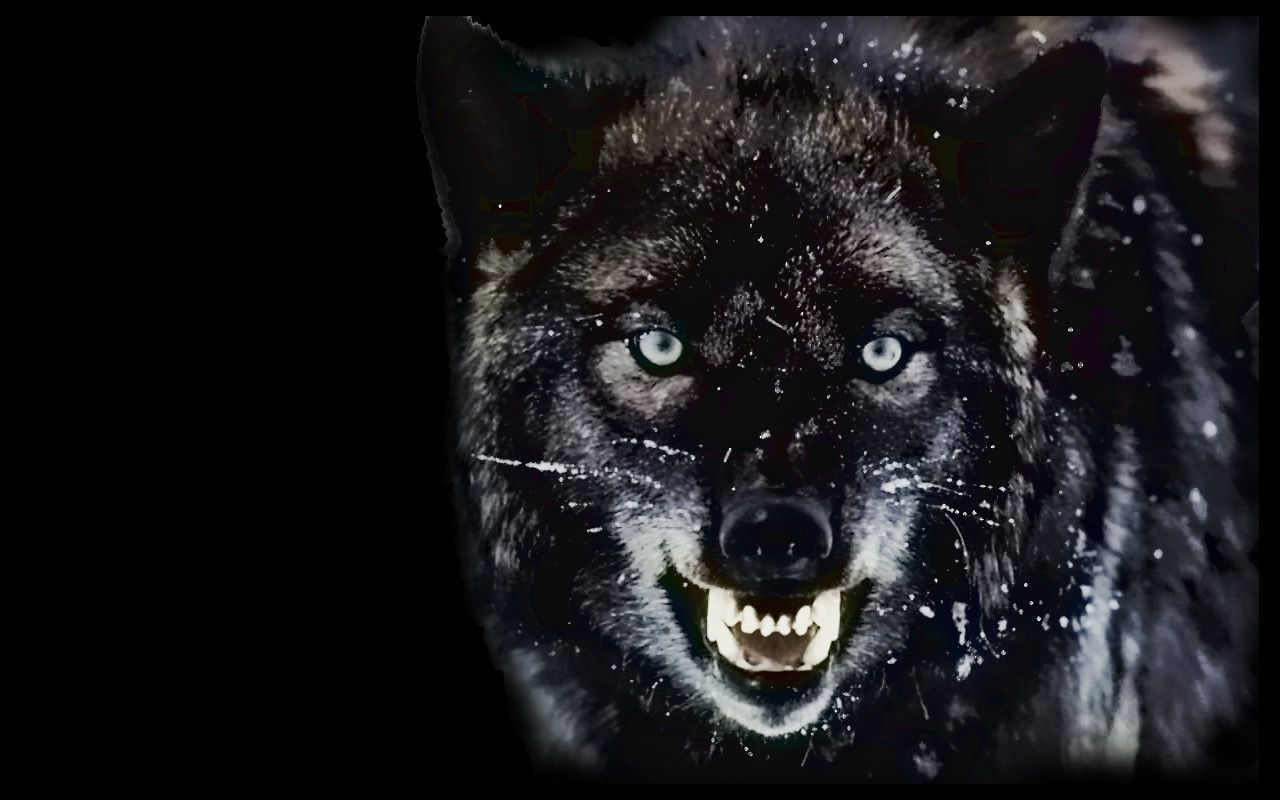 Angry Wolf Wallpapers Android Animal Wallpaper In 2019
