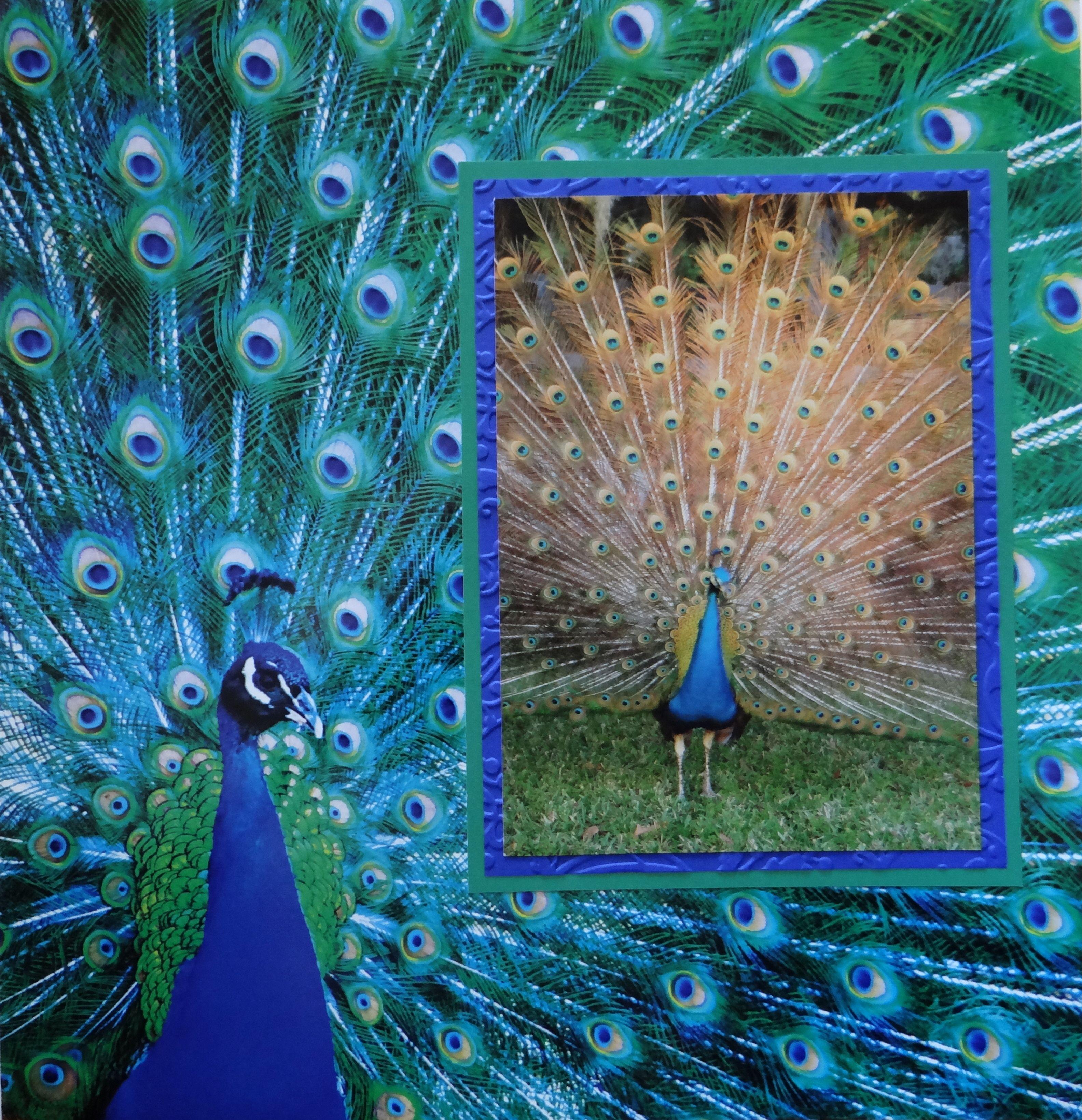 Scrapbook ideas zoo -  Ver 1 000 Bilder Om Zoo Layouts P Pinterestdjurriket Scrapbookinglayouter Och Layout