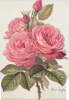 Pin By Judy Mcmillan On Journals All Kinds Pinterest Blumen