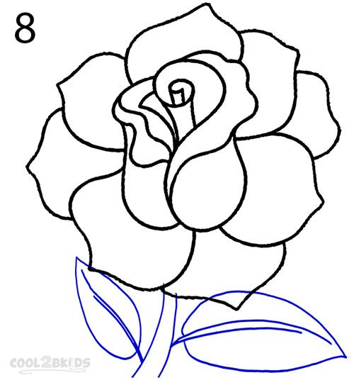 Drawing roses for beginners google search roses for Easy to draw roses for beginners