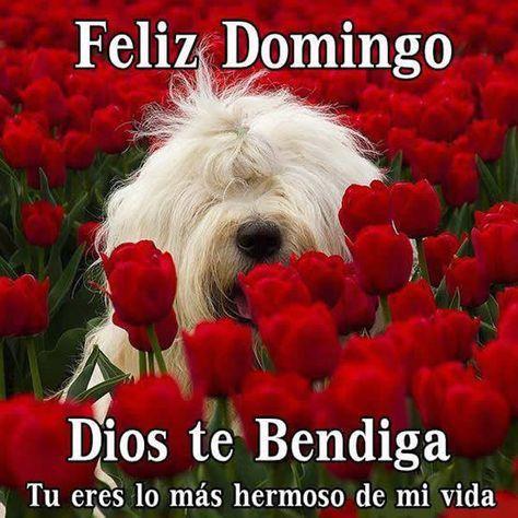 Frases Con Rosas Rojas Poemas De Amor Amor Pinterest Feliz