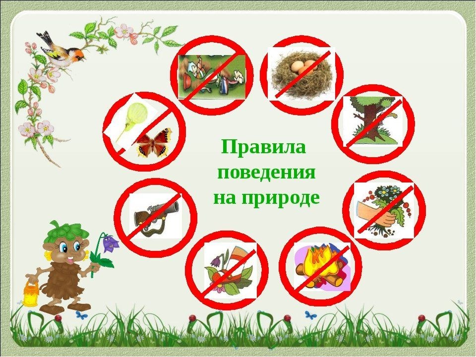 Правила поведения на природе для детей памятка в картинках ...