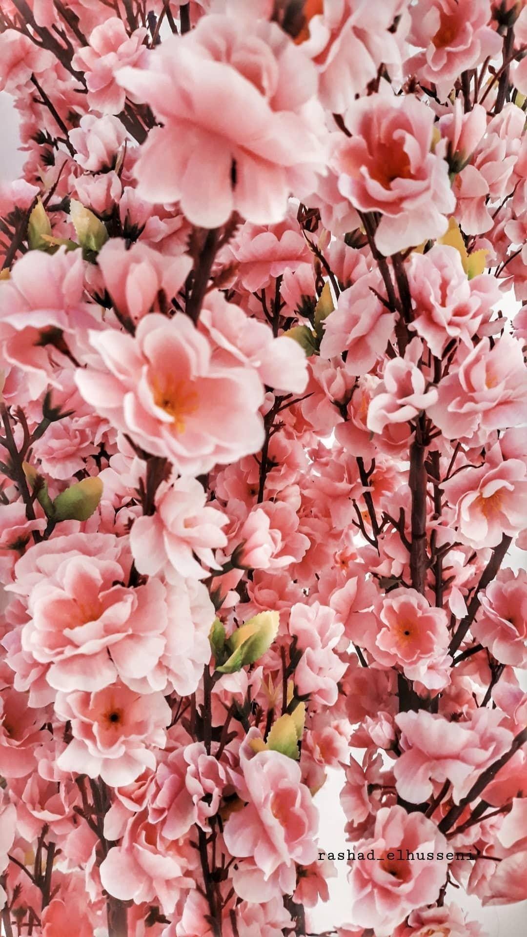 Flowers Flower Photography Instapic Petal Petals Nature Beautiful Love Pretty Plants Blo Instagram Photo Instagram Photo