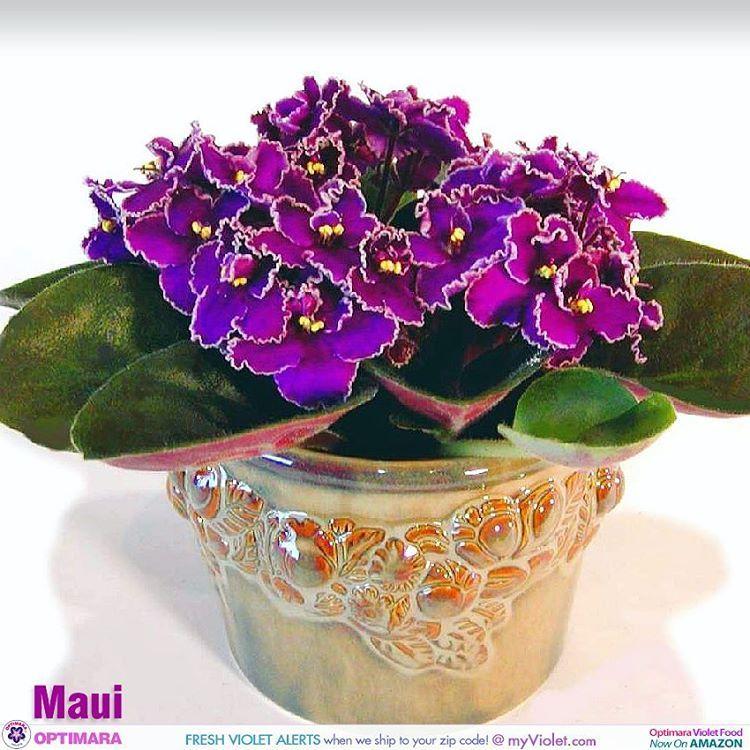 Repost Optimaraviolets Maui From Island Series Flowerphoto - Maui zip code