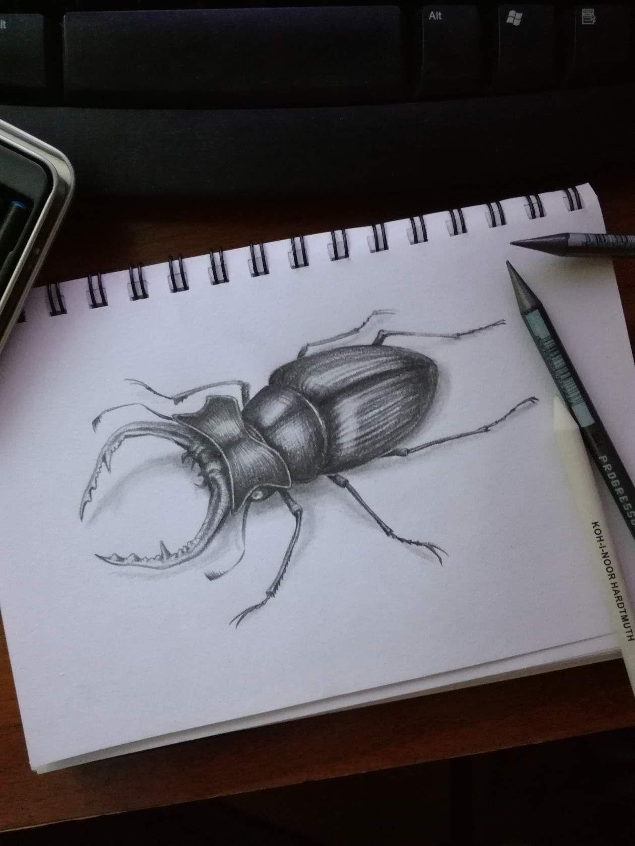 Картинка нарисованного жука-оленя