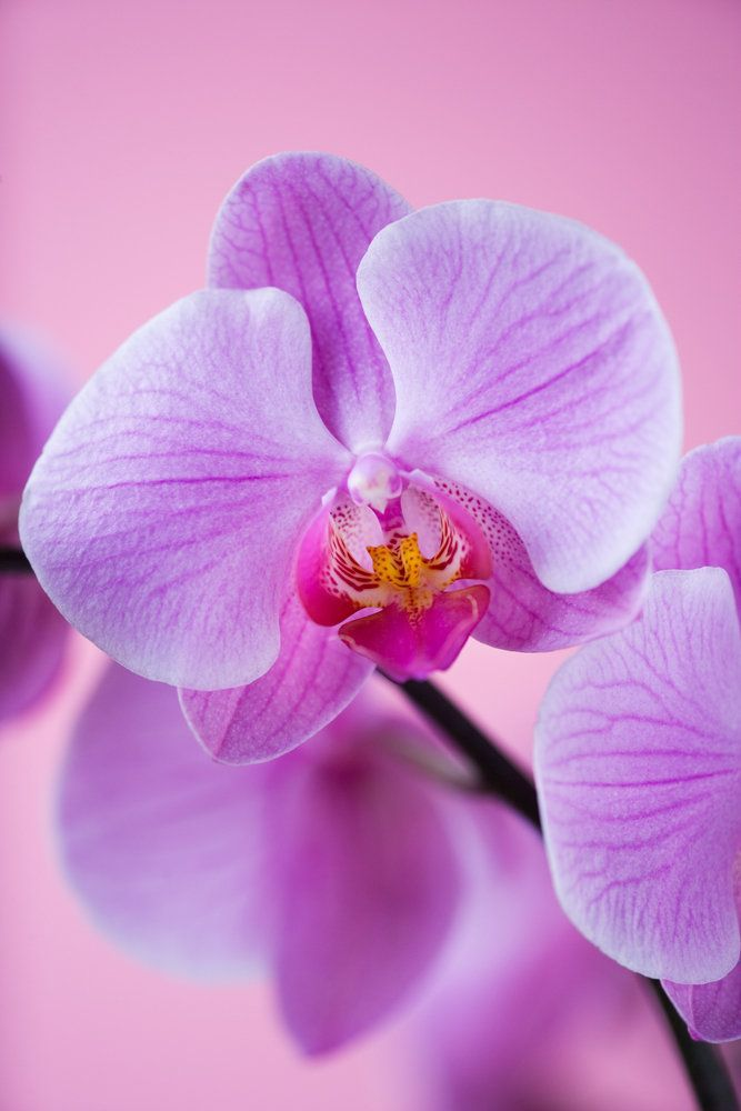 Pin On Beautiful Flowers