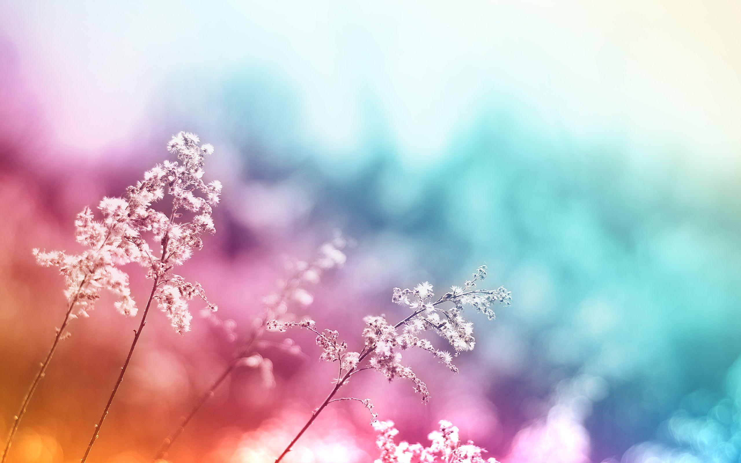 Beautiful Colored Flowers Macro Wallpaper Desk Wallpaper