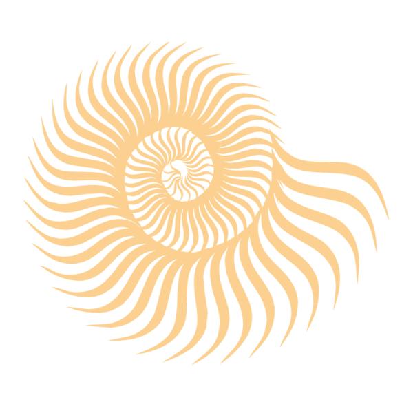 Wandtattoo Ammonit - Bild 3
