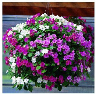 Livraison gratuite graines de fleurs plante suspendus for Livraison fleurs livraison gratuite