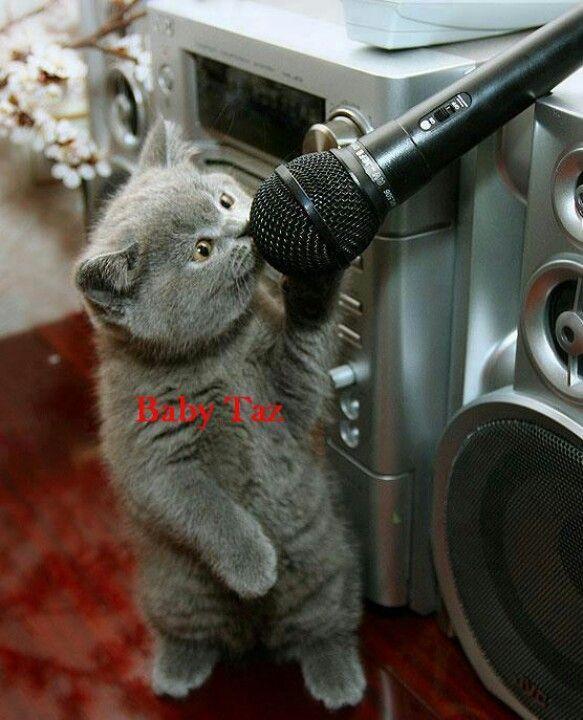 Catsinger