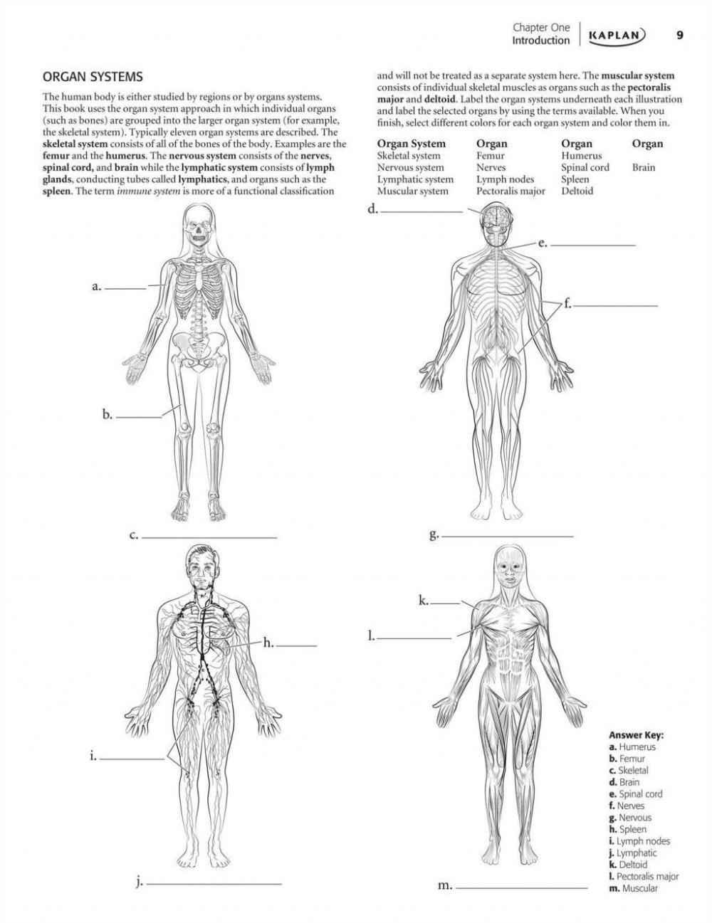 Human Brain Coloring Book Inspirational Anatomy 3rd