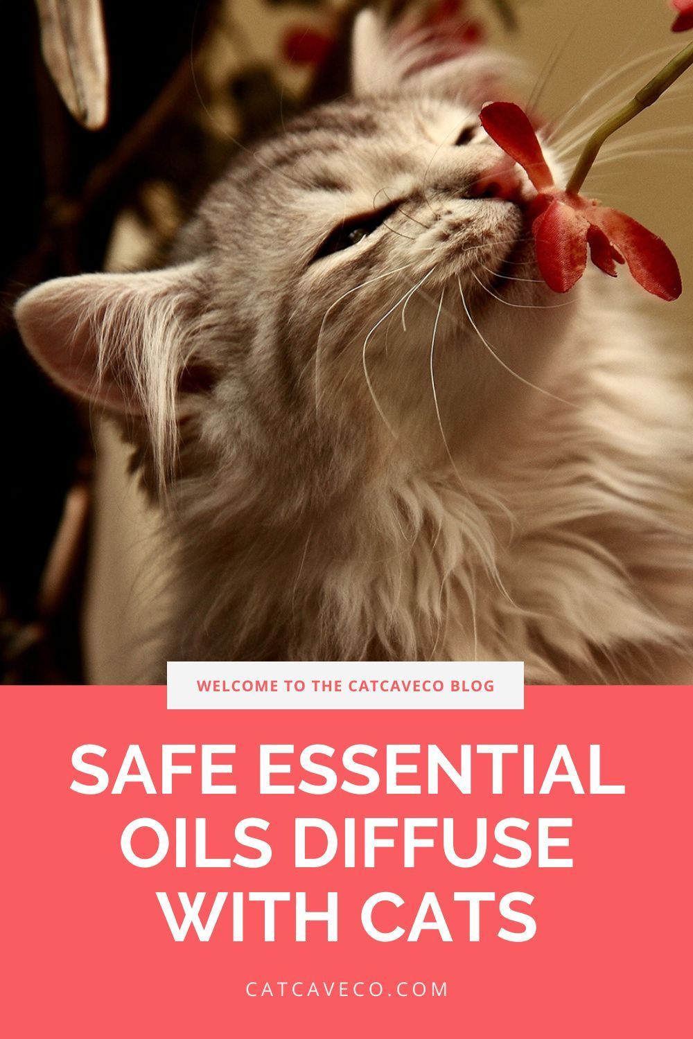 What Essential Oils Are Safe To Diffuse Around Cats In 2020 Are Essential Oils Safe Pet Care Cats Cats