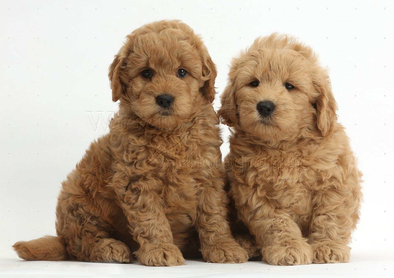 cute dogs and puppies wallpapers wallpaper 1363×962 puppy wallpaper
