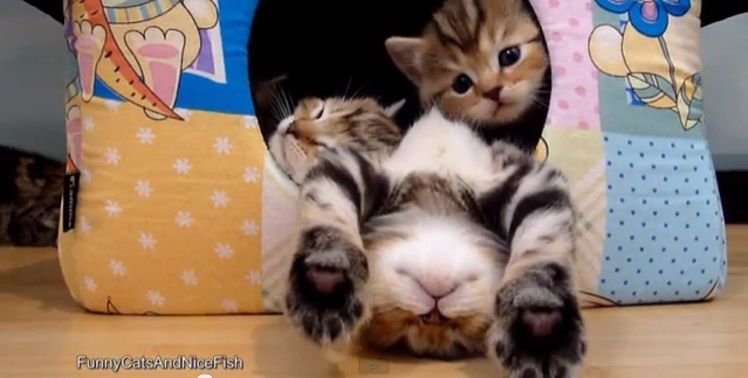 We Apologize In Advance For How Disgustingly Cute This Is Funny Cute Cats Cute Cat Gif Cute Cats