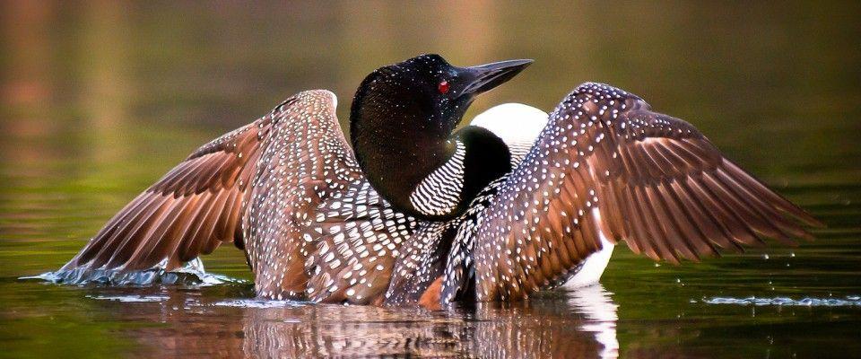 http://www.imagesredefined.net/wildlife.html