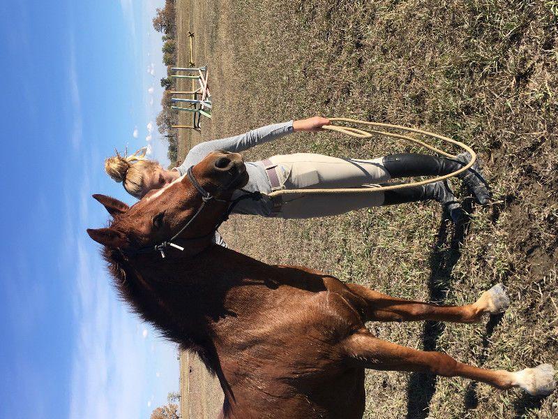 Fantastic Project Ponies Horses Ponies For Rehoming Calgary Kijiji Pony Horse Horses Kijiji
