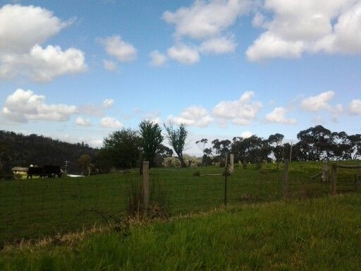 Day 272 ... Out the back of Upwey.