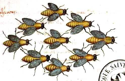 Google Image Result for http://www.mrsstarch.com/wp-content/uploads/2013/01/Animal-Insect-Bees-Medieval-Swarm.jpg