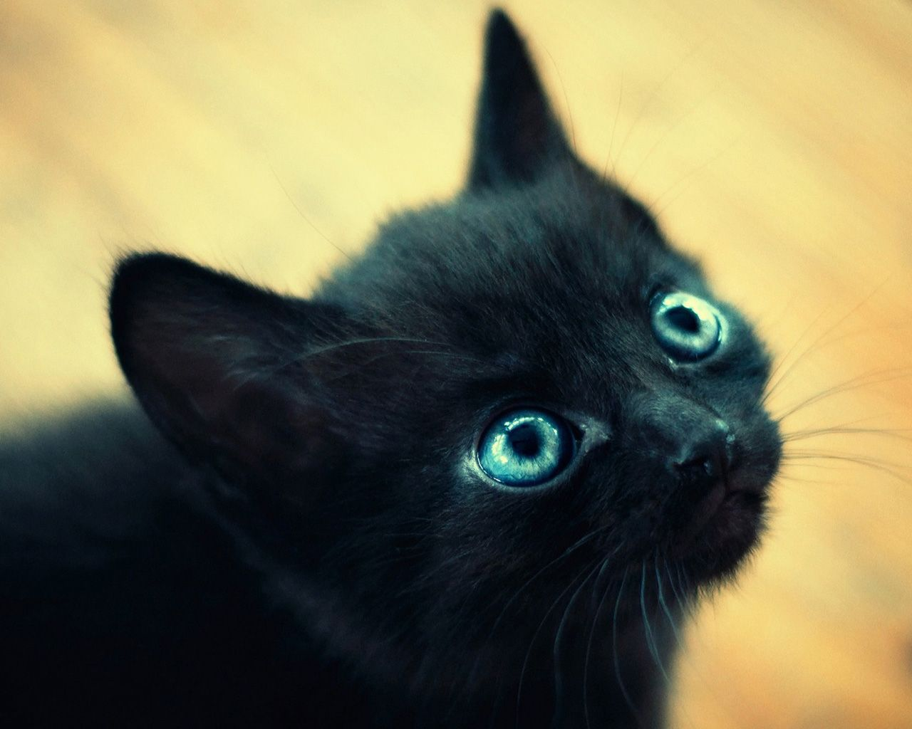 black cat with big blue eyes