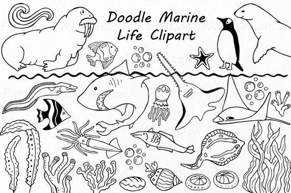 Big Set Of Doodle Marine Life Clipart Sea Life Clip Art Ocean Life