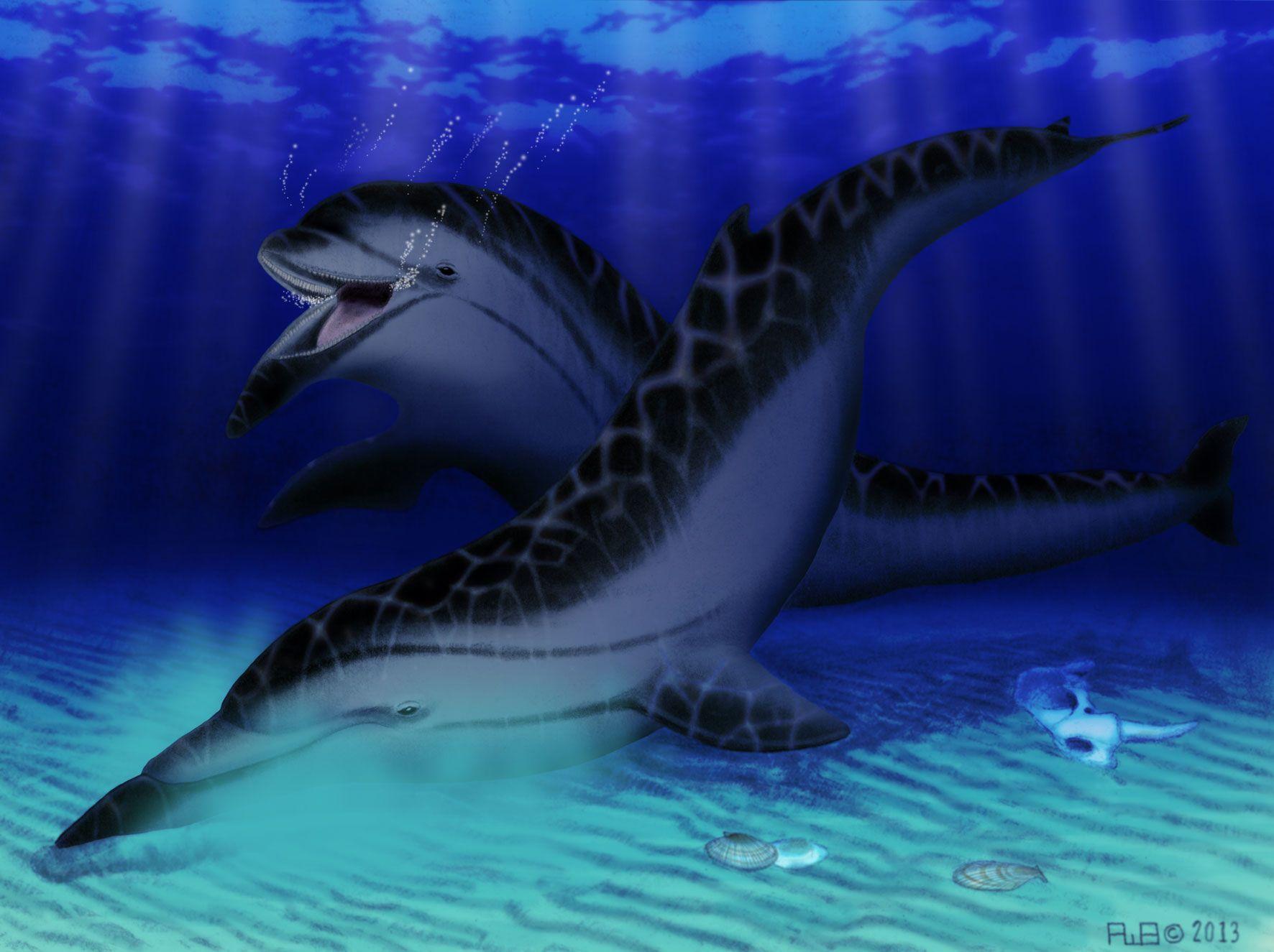 Semirostrum Ceruttii, un mamífero marino extinto con una anatomía ...