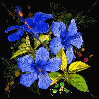 Blue Tropical Flower Hibiscus Flower Artists Hibiscus Hibiscus Flowers