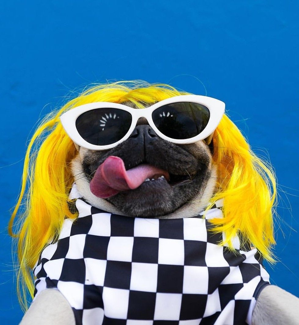 Pin De Sarah En So Cute Perro Con Lentes Fotos De Perros Lindos Fotos De Perros Graciosas