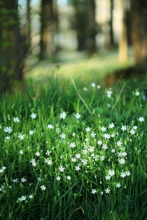 Green grass tiny white flowers wheat fence sea oats grasses green grass tiny white flowers mightylinksfo