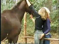 9 حيوان بورن ideas in 2021 | free horses, california roll, crab meat