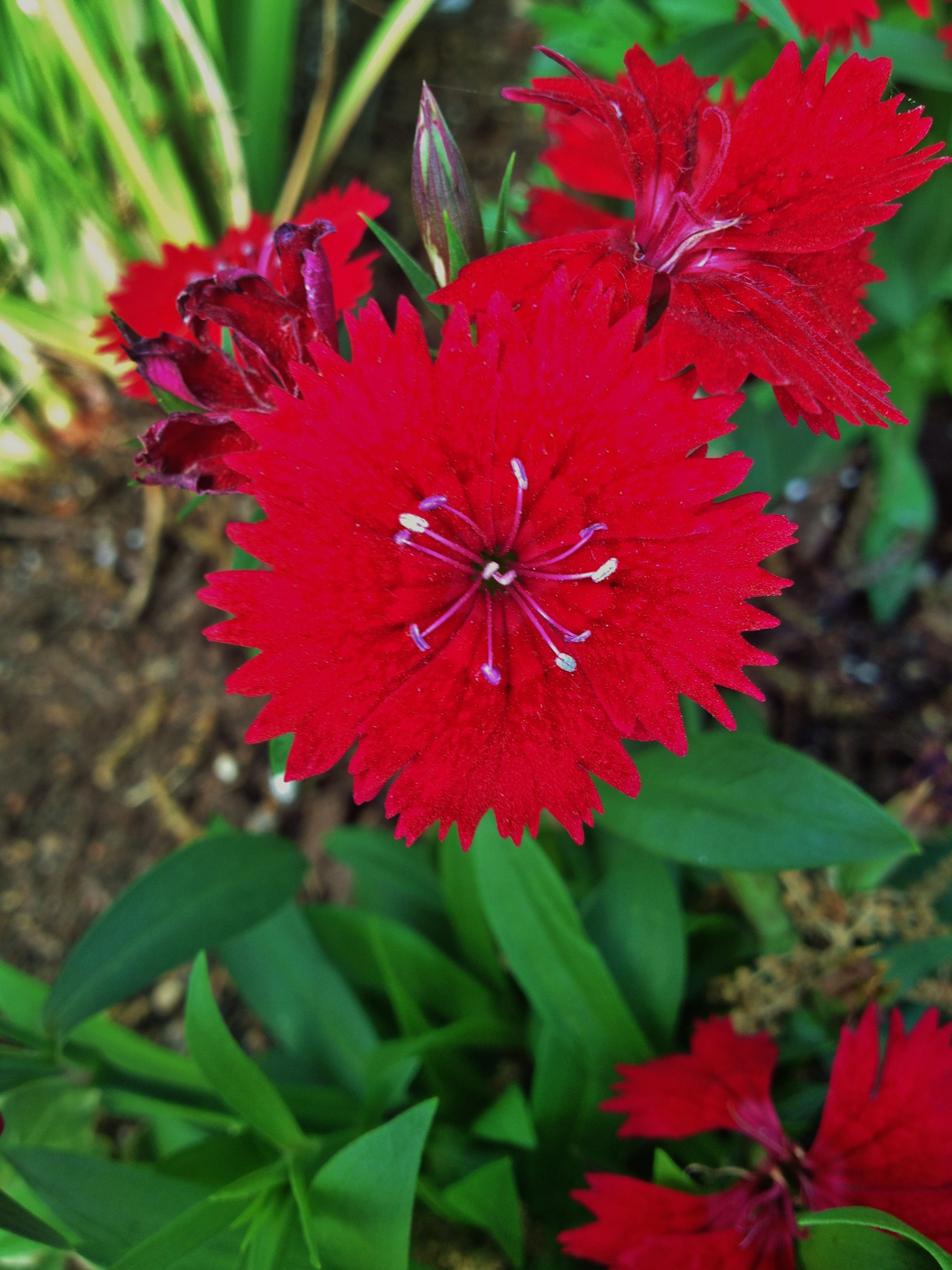 Spiky Red Flower Flowers By Morgan Pinterest