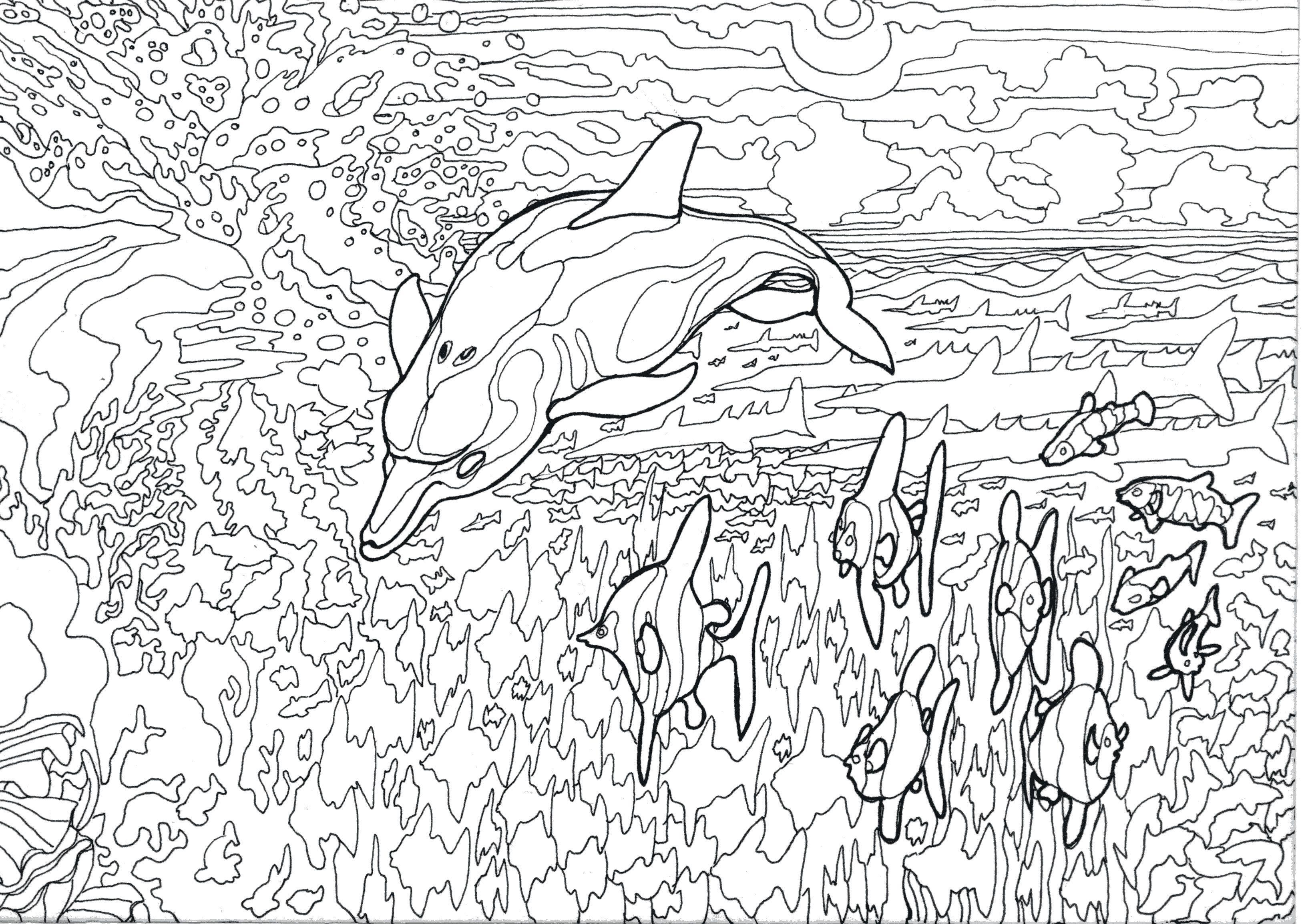 delfin dolphin art dessin arte dibujo marino blanco y negro olivier martinet oliviermartinetart