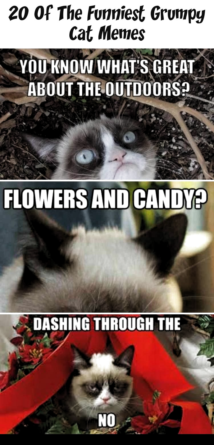 funny cat memes grumpy | funny cat memes ; funny cat memes laughing so hard ; funny