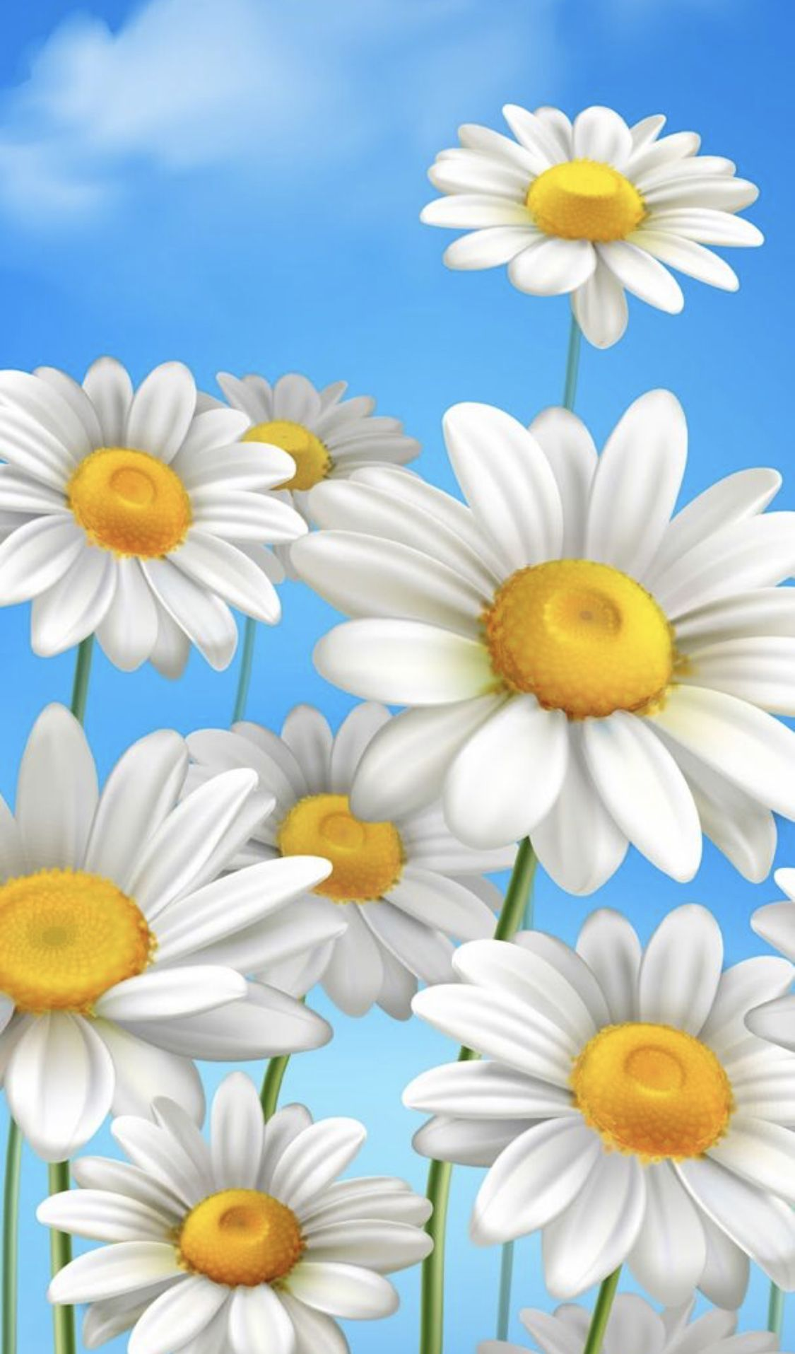 Daisies Daisy wallpaper, Beautiful flowers wallpapers