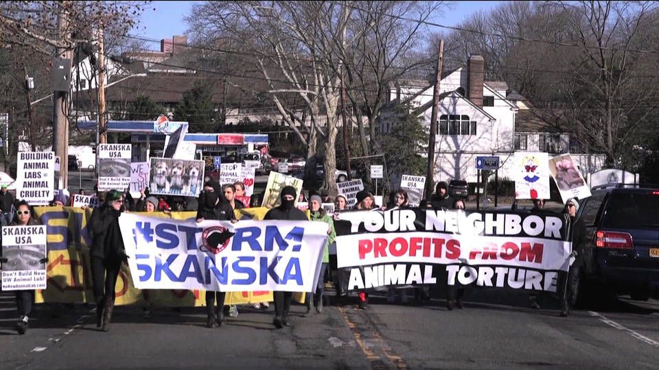 New York Animal Rights Activists Target Construction Firm Over Seattle Research Lab Animal Rights Activist New York Animals Animals
