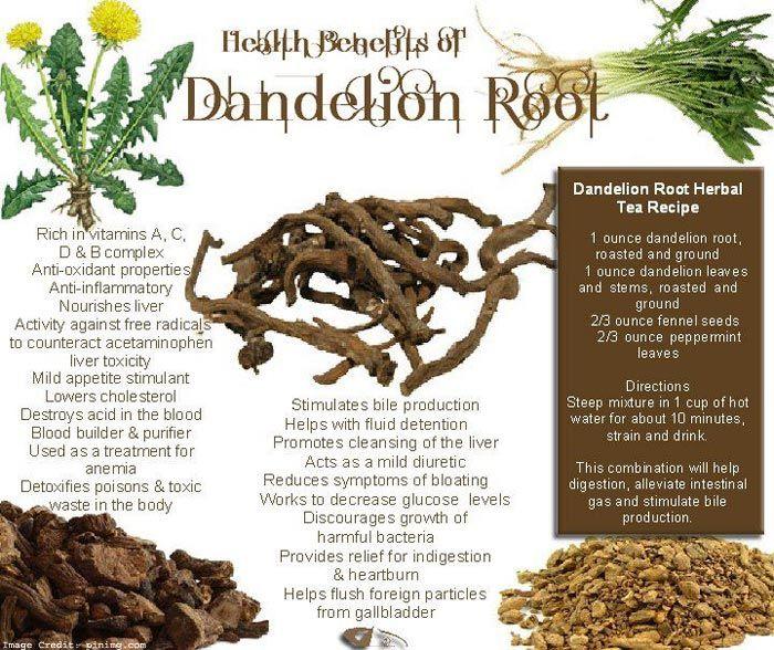 Top 25 Health Benefits Of Dandelion Root Extract Herbal Teas Recipes Herbalism Dandelion Benefits