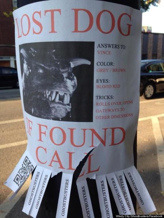 The 10 Most Awesome Lost Pet Flyers Losing A Dog Ghostbusters