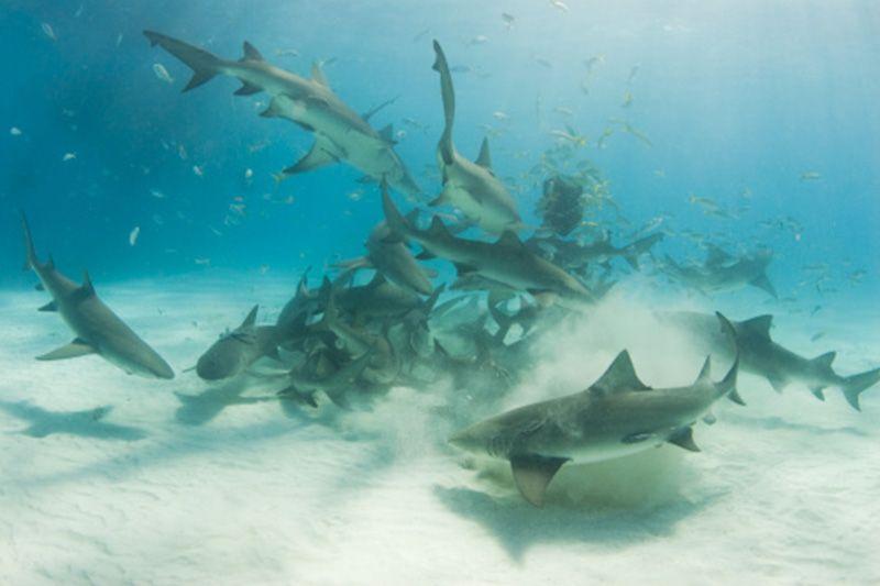 Keys Shark Tours Photos Shark Diving Animals Shark
