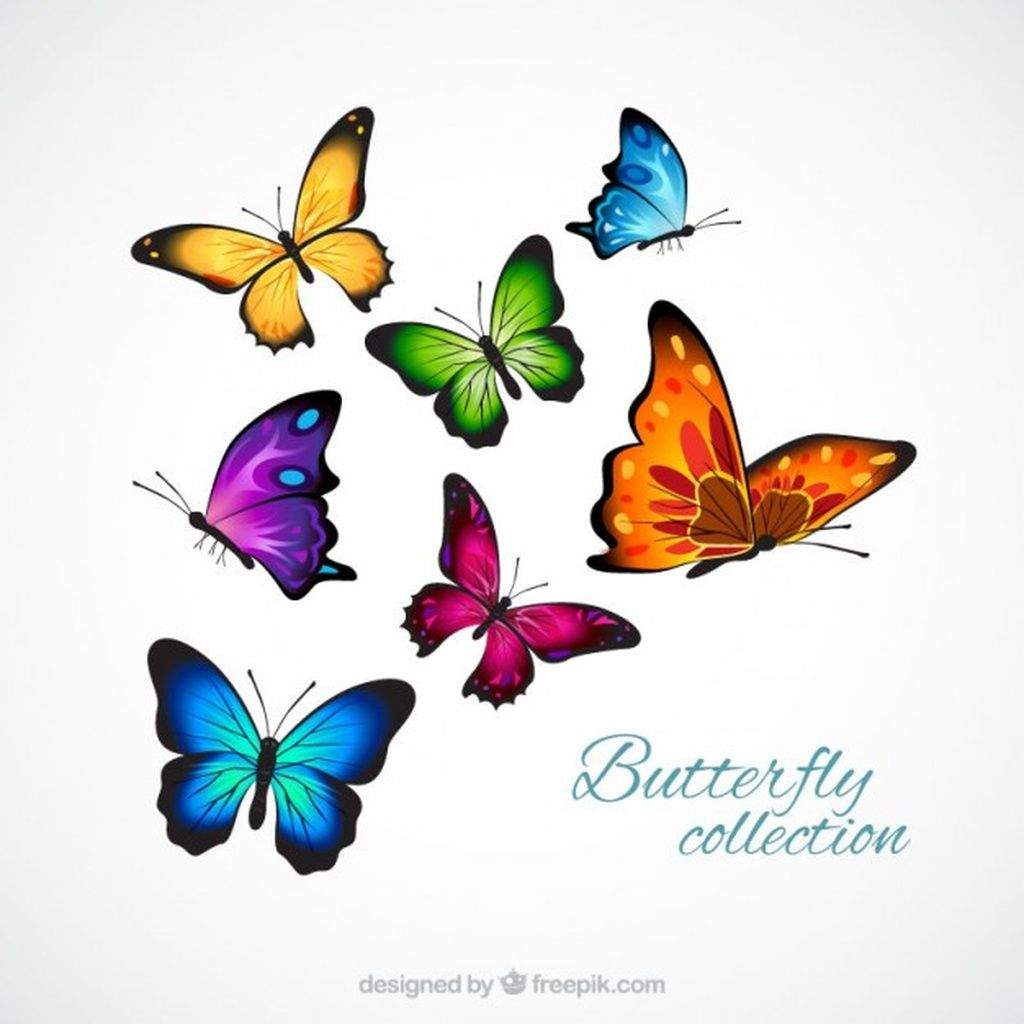 Realistic And Colorful Butterflies Paid Sponsored