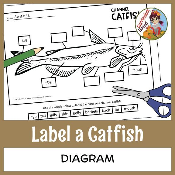 Label a Fish Diagram - Parts of a Fish Labeling - Channel Catfish