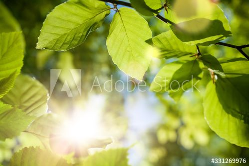 Stock Image: Green leaves closeup with the sun in the blurred background