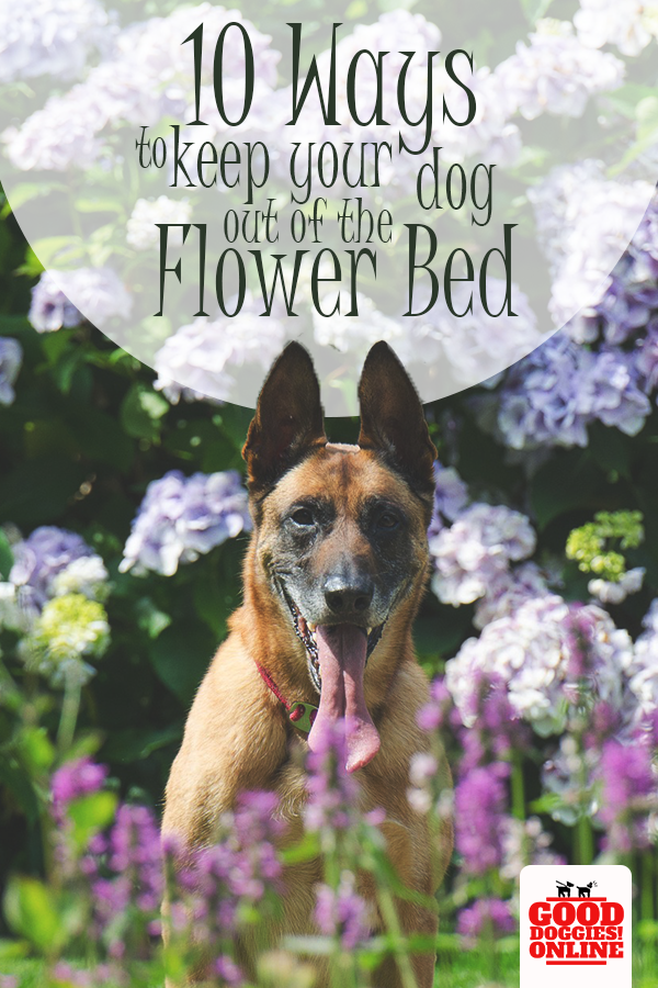 How To Keep Dogs Out Of Garden Flower Beds Dog Training Dog Training Obedience Puppy Training