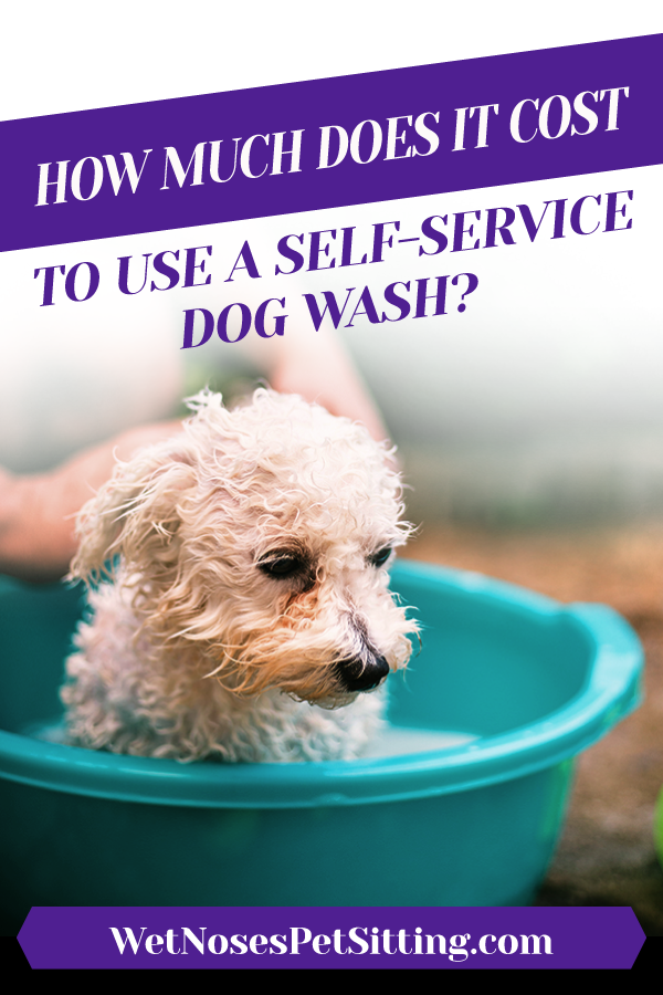 How Much Does it Cost to Use a SelfService Dog Wash