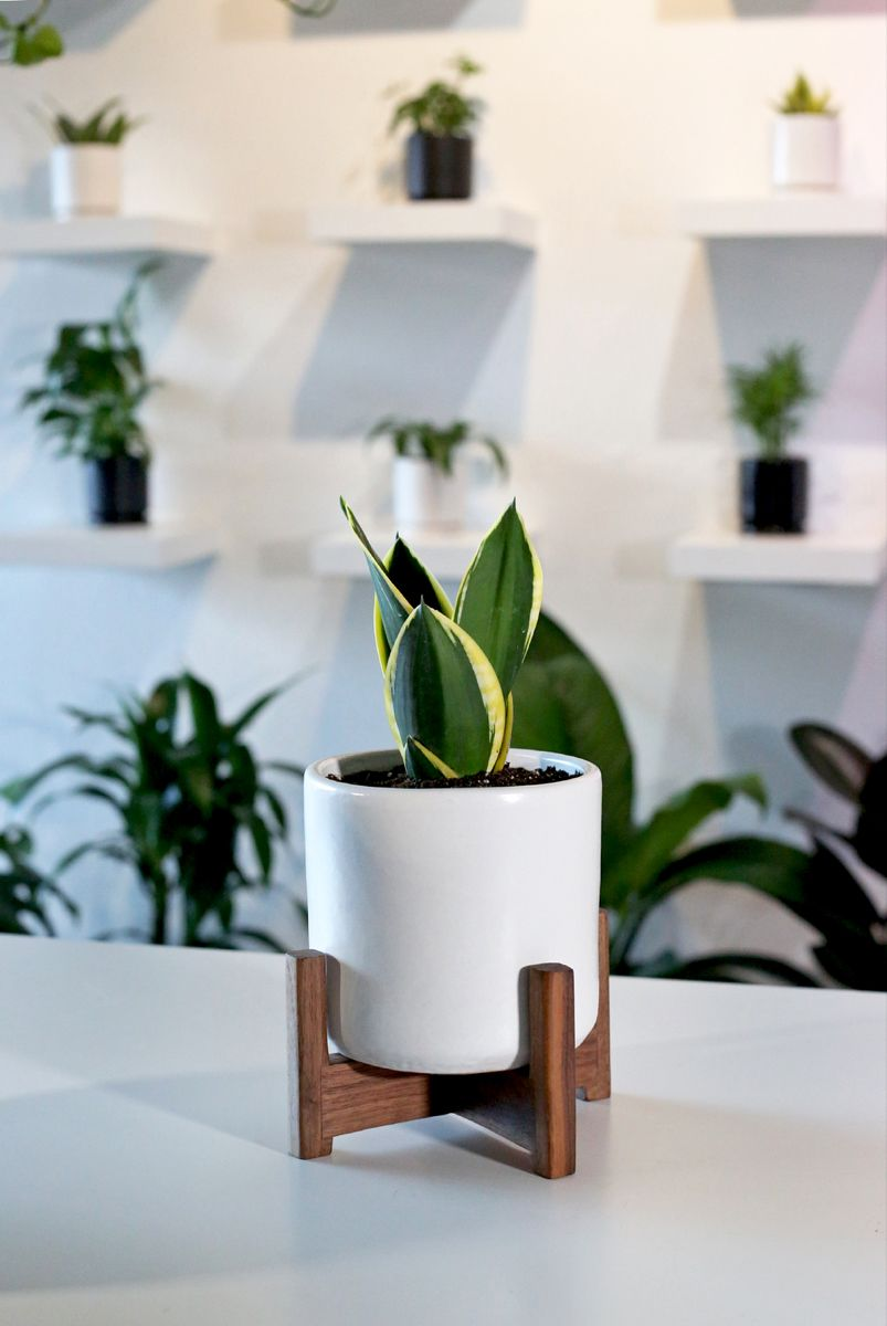 Give life to your work desk or home office! -   17 planting Indoor desk ideas