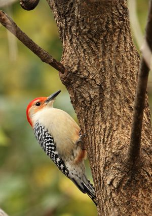 How To Get Rid Of Birds In Backyard how to get rid of woodpeckers | how to guides: bob vila's picks