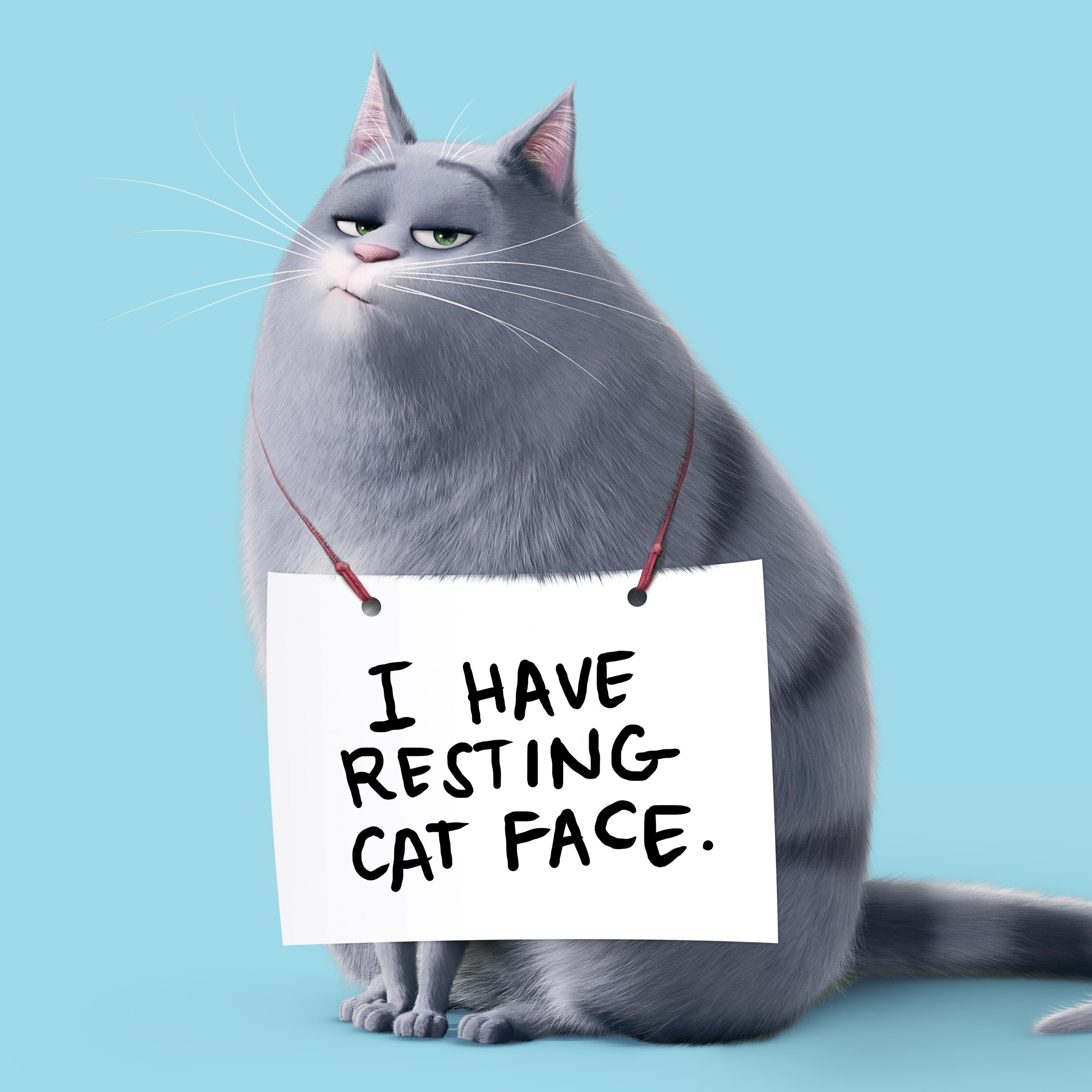 I Have Resting Cat Face Chloe The Secret Life Of Pets