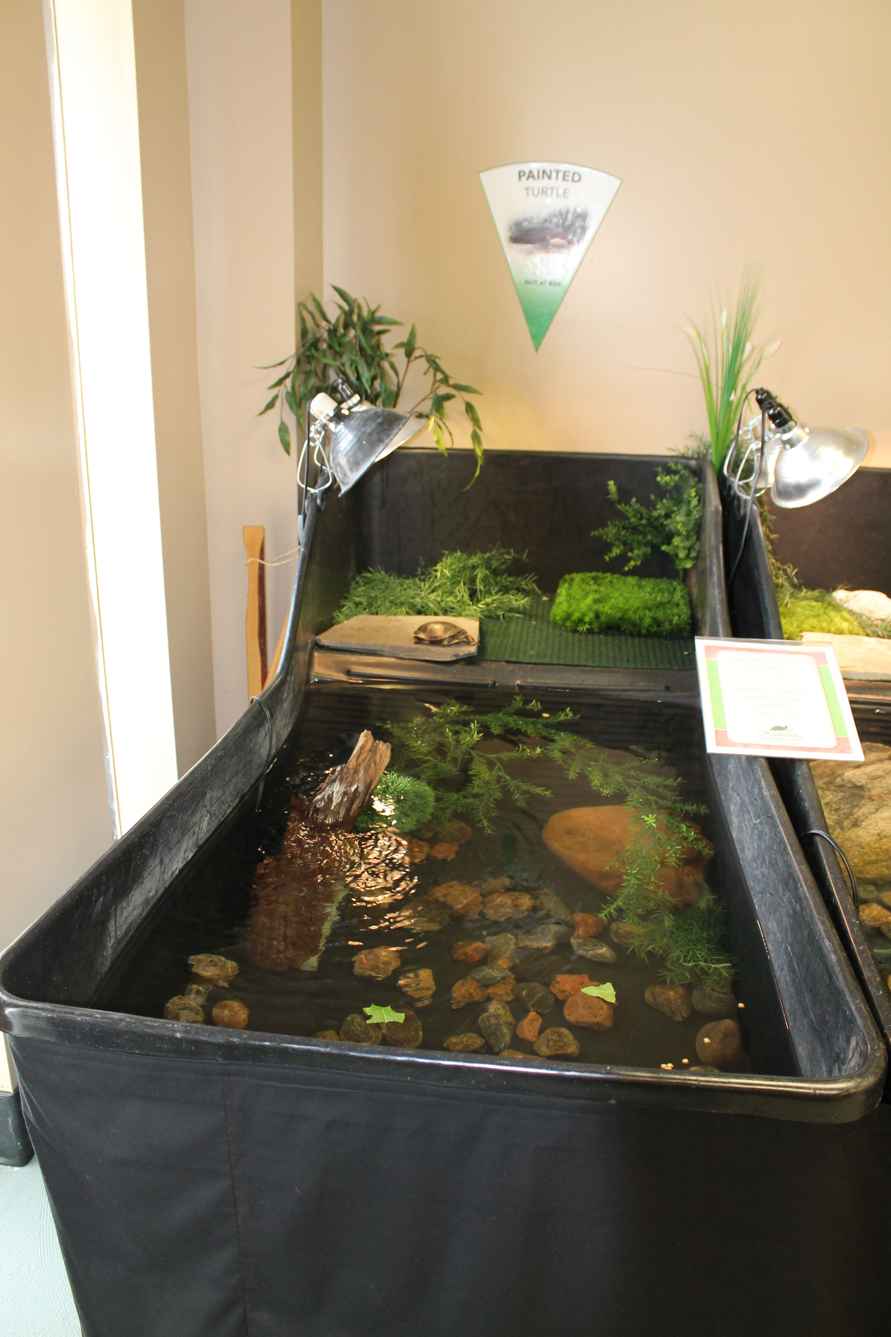 Trauma Room Design: Pin On Turtles